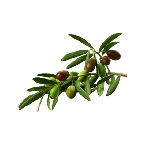 deco peinture cuisine tendance sticker rameau d 39 olivier adhésif décoratif sticker