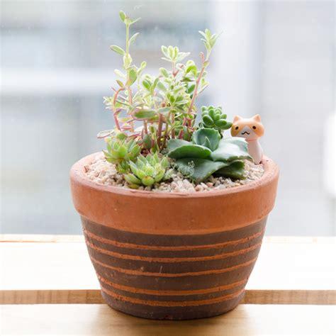 Succulent Tiny Garden สวนกระถางผสมกุหลาบหิน +ตุ๊กตาแมว (ชุดต้นไม้พร้อมกระถาง ตามรูป) (JL-01)