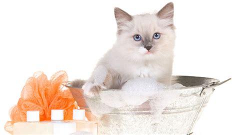 animale vanitoso bagno per gatti legnano peluqueria canina