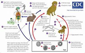 Neglected Parasitic Infections: What Every Family ...