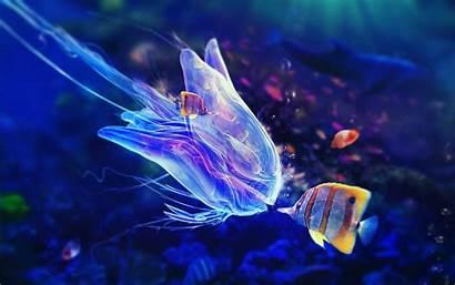 Fish Colorful Underwater Sea Animals Jellyfish Desktop