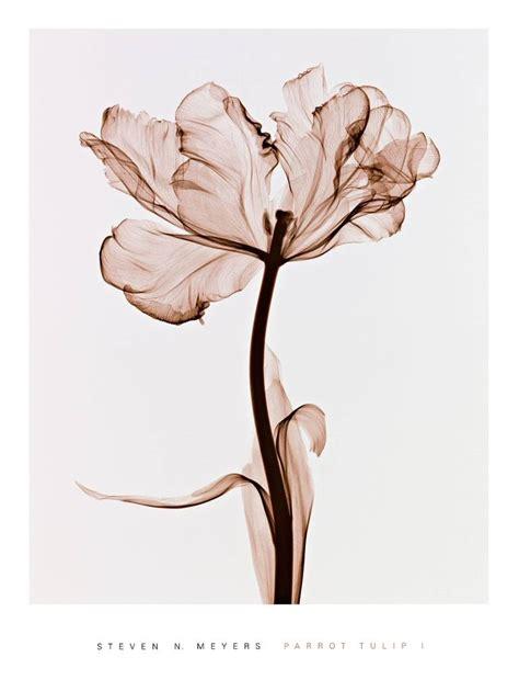 steven  meyers posters  photo flowers art