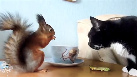 cat  rescue squirrel love sharing breakfast funnycom