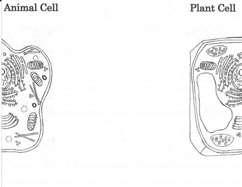 plant  animal cell foldable templatepdf classroom