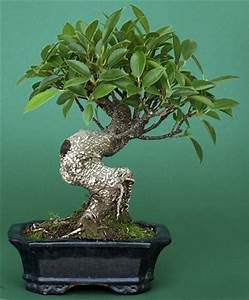 Bonsai Baum Arten : emejing bonsai baum pflegen ideas ~ Michelbontemps.com Haus und Dekorationen