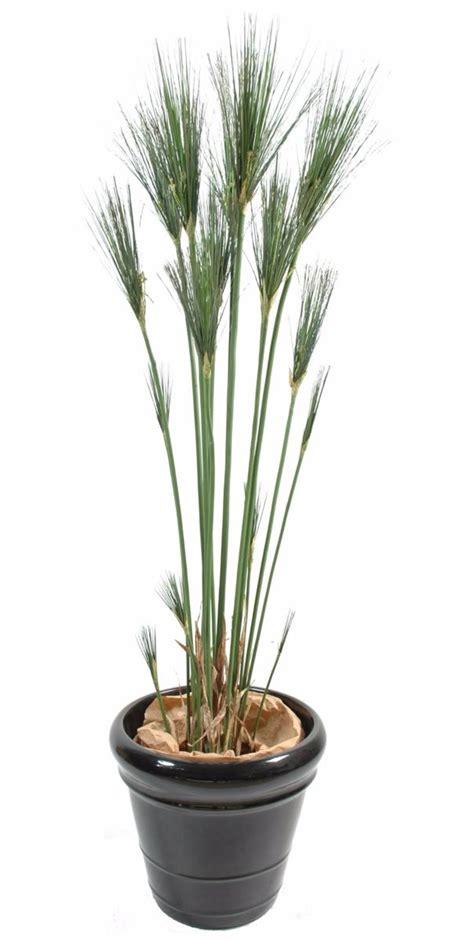 planter un papyrus en pot plante artificielle papyrus cyperus de nil en pot int 233 rieur h 125 cm vert