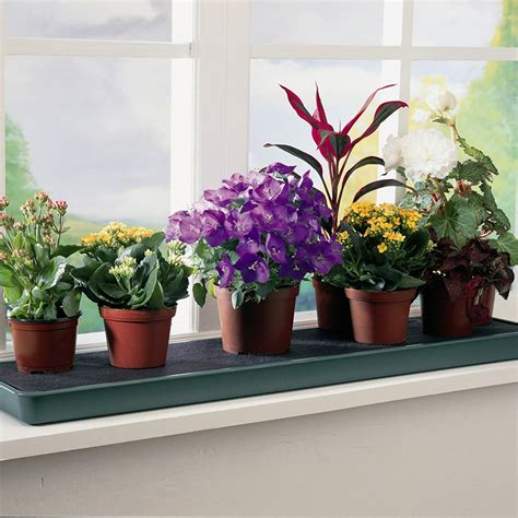 Plants For Windowsill by Buy Self Watering Windowsill Plant Tray