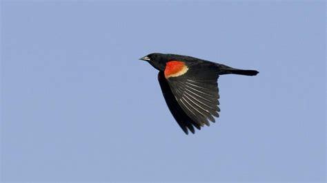 how fast do birds fly reference com