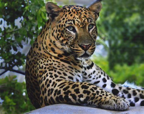 Wild Animal Wallpapers Wallpapersafari