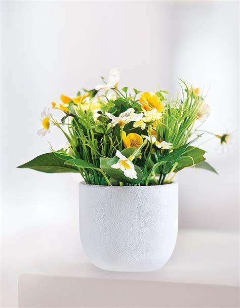 Garten Pflanzen Toom by Zimmerpflanzen Angebote Toom