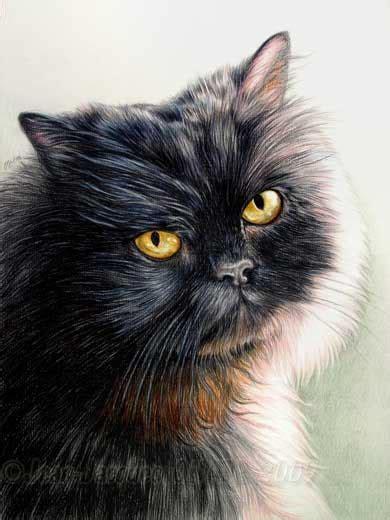 chat persan noir portrait du chat persan noir boule par jean jacques onate