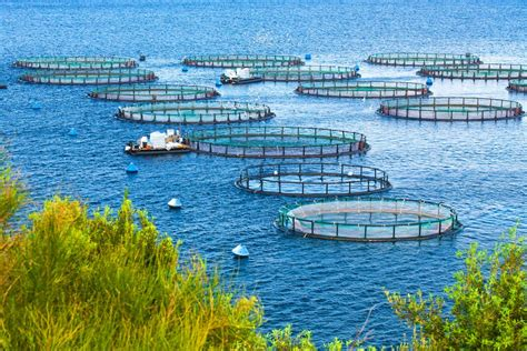 common methods  aquaculture  healthy fish
