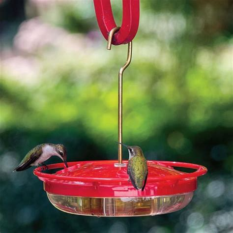 mini high perch hummingbird feeder at spring hill nurseries