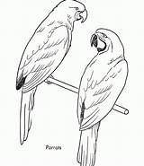 Coloring Pages Bird Parrots Parrot Budgie Printable Sheet Colouring Drawing Animal Sheets Birds Printables Simple Galah Realistic Drawings Stripes Bestcoloringpagesforkids sketch template