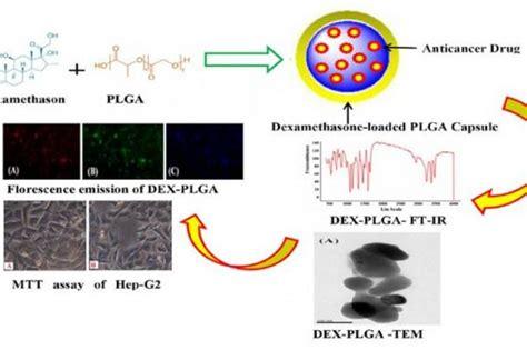 dexamethasone loaded plga microspheres effective
