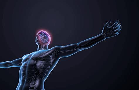 understanding  central peripheral nervous systems