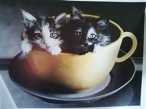 Baby Kittens in a Cup images