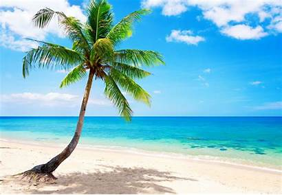 Paradise Tropical Beach Dog Vacation Ocean Sea
