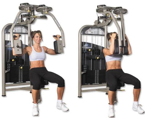 seated chest press bodybuilding forums