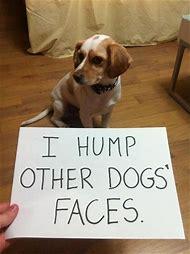 Shaming Funny Dog Memes