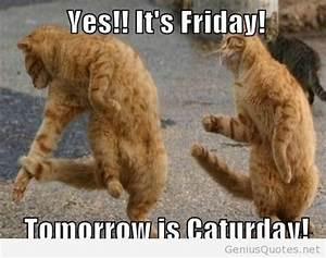 Funny cats quotes with friday