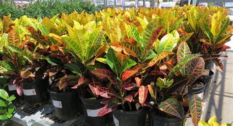 planting in the fall landscape design and maintenance blog eugene and springfield oregon graham landscape design