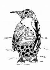 Coloring Adult Penguin Intricate Pages sketch template