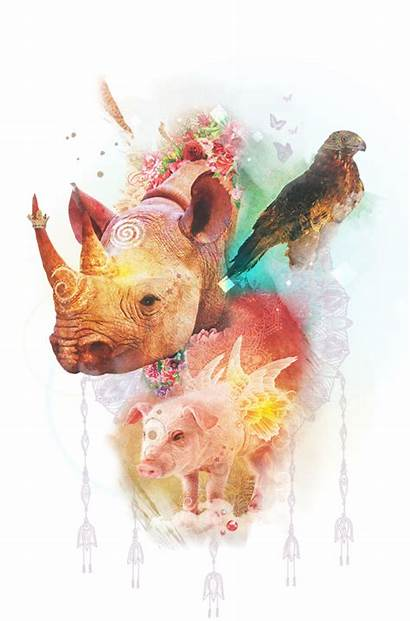 Spirit Animal Animals Baron Colette Reid Oracle