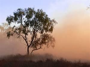 Free, Images, Landscape, Tree, Nature, Grass, Swamp, Branch, Sky, Fog, Sunrise, Sunset, Mist
