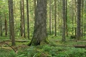 Bilder Vom Wald : suche wald wiese bezirk perg ~ Yasmunasinghe.com Haus und Dekorationen