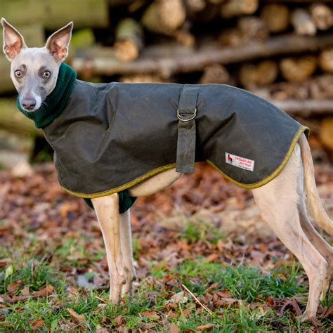 waterproof cumbria whippet coat redhound  dogs