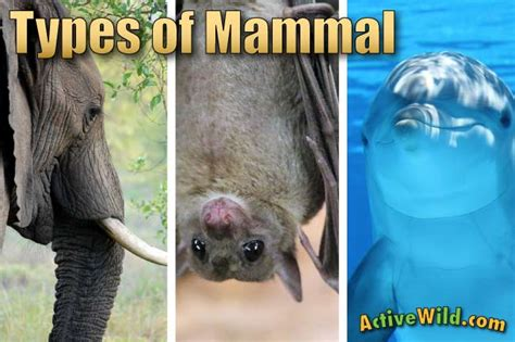 Types Of Mammals: Pictures & Facts Learn About The Main