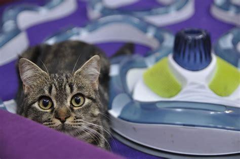 Animales: Día internacional de los gatos: seis secretos ...