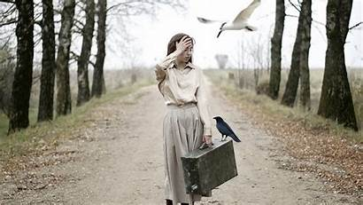 Suitcase Crow Situation Birds Trees Allwallpaper Wallpapers