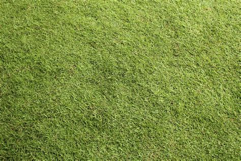 lawn grasses seven free grass textures or lawn background images www myfreetextures com 1500 free