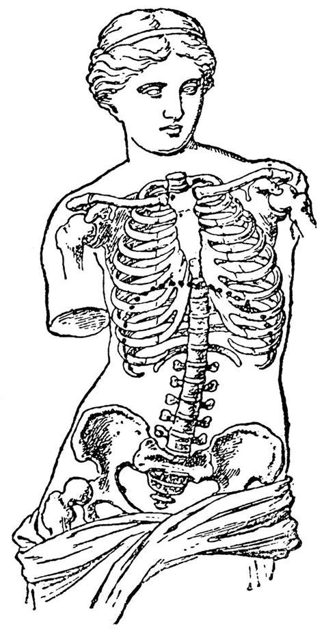 1569 best ANATOMICAL ILLUSTRATION images on Pinterest | Anatomy, Anatomy reference and Body anatomy