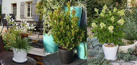 plantes en pots pour terrasses et balcons