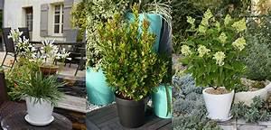 Plantes Grimpantes Pot Pour Terrasse : plantes en pots pour terrasses et balcons ~ Premium-room.com Idées de Décoration