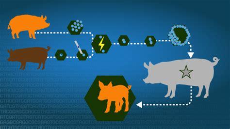 fact sheets about genomics nhgri