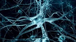 Scientists Want To Grow Neurons In Older Brains  U22c6 Into The