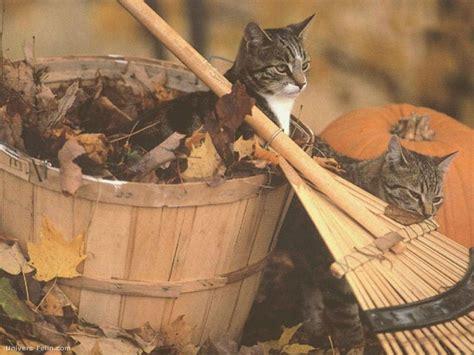 mettre les favoris sur le bureau fond d 39 écran de deux chats en automne