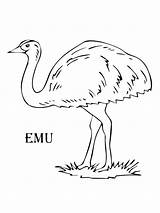 Emu Coloring Pages Drawing Printable Birds Colors Recommended Getdrawings Supercoloring Wallaby Mycoloring sketch template