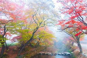 Misty Autumn Scenery of Seonunsa Temple, South Korea