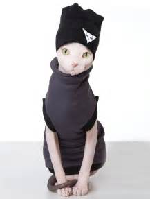 cat clothing cat clothes 33 photo cat dompict