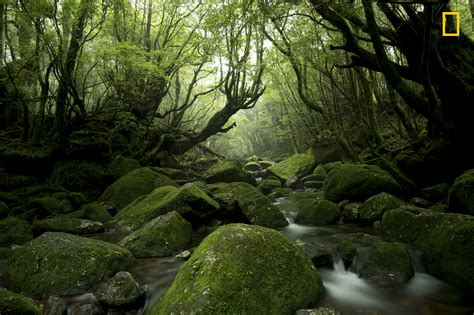 10 Sickashell Nature Photos From Natgeo's Latest