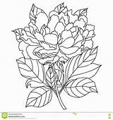 Coloring Peony Flowers Flower Adults Awesome Peonies Amazing Viatico Drawings Jacobean Pencil sketch template