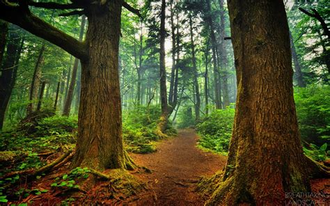 beautiful forest forest breathtaking landscapes