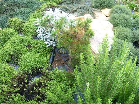plantes aromatiques cuisine les plantes aromatiques pictures