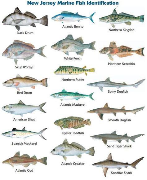 nj marine species identification fish types  fish