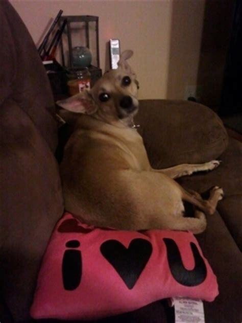 molly s place rescue pet mechanicsburg pa